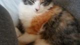 ワイの家の猫グーグー寝てるから見て(※画像あり)