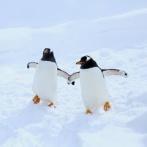 ペンギンに「宇宙人の可能性」が浮上 糞から金星にある化学物質と同じものを発見