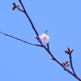 『ムーンシャドウ / 桜開花宣言』の画像