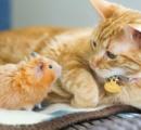 ネコとハムスターの厚い友情が話題に