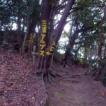 「立木に黄色いペンキで案内標識が書かれました」