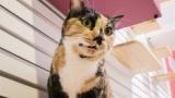 【悲報】一人で猫カフェに行ったワイ、猫が一匹も寄り付かず客の女に笑われて恥をかかされる