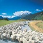 ニュージーランド人がアジアの国の中で最も好感度が高いのは日本