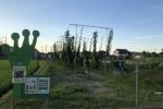 交野にホップ畑ができてあれから1ヶ月ちょっと。天高く高さ5メートルくらいにスクスク育ってる!〜7月24日(土)には収穫祭も予定されているみたい〜