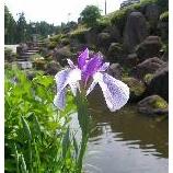 『お庭には・・・』の画像