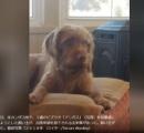カンザス州知事選に犬(3)が出馬申請