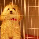 『【ペットホテル】MIX犬もふちゃんの一日!』の画像