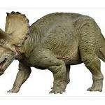 【恐竜】トリケラトプスの角…あれ○○○ために大きいらしいぞwww