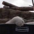 白い毛玉はどうなるの? 今日は気温が高いので、タライに氷を入れてみた → シロクマさんはこうなります…