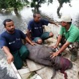 『「明明百草頭」大洪水に巻き込まれる野生動物たち』の画像
