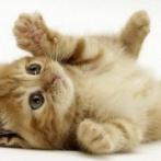 【胸糞】長崎市でゴミ袋に入れられ捨てられている子ネコ4匹が見つかる 保護されるも・・・