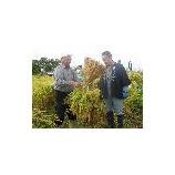 『稲刈り』の画像