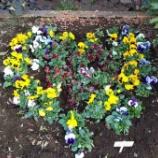 『戸田市店市役所南通りの花の植え替え。市役所南通りの景観と文化を育む会の定期活動です。通りのどこかに幸せになるスポットといわれる花のハートマークがあります。探してみてね!』の画像