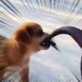 小さな子イヌは一緒に「お散歩」したかった。ねぇねぇ行こうよぉ! → でっかいブタにこうします…