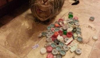 猫の収集本能がこんなにスゴイとは 「これ全部私のコレクションだニャン!」