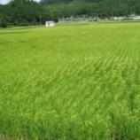 『秋鹿酒造の米作りを見学して来ました』の画像