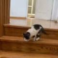 子ネコが階段を降りてきた。床では犬がくつろいでいる。…えいっ♪ → 子猫、わんぱくです…
