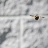 クマバチ、工学的には飛べるはずがない身体だった…それでも飛べる理由に涙が止まらない