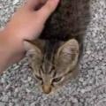 【子ネコ】 配達の仕事中に人懐っこい子猫がいた。かわいいなぁ。でも今は仕事中 → 結果…