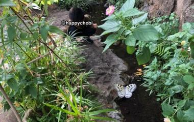 『楽園のようなところが多摩動物公園にあった。』の画像