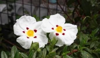 【雑学】ゴジアオイとかいうヤバすぎる植物wwwwwww