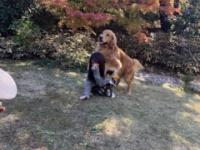 【乃木坂46】与田祐希、山羊の次は犬に襲われるwwwwwwwww