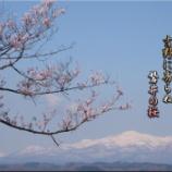 『磐井の桜』の画像