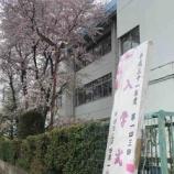 『本日は戸田市内の小中学校で入学式!美しい桜が文字通り華を添えてくれました。入学式の時間は雨も上がる幸運も!子どもたちには健やかに育ってほしいです。』の画像