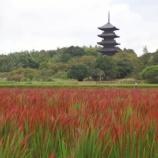 『初めて見た赤米の茜色の稲穂、幻想的で美しい!』の画像