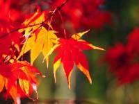 秋アニメの百合はどうなの?秋アニメの百合的な感想をまとめてみた