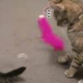 ネコが「ねこじゃらし」で遊んでいた。目の前には子猫の「しっぽ」がある → 猫は思わずこうしちゃう…