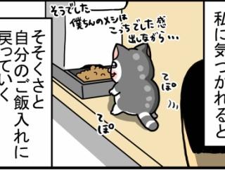 してはいけないことだと何となく理解してる猫