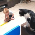ハチワレ猫「よし、遊び方は把握した!夜が来るのが待ち切れニャい」と、弟の寝ている間にオモチャを満喫する