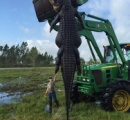 牧場の牛襲った巨大ワニを捕獲、体長6メートル&体重は360キロ