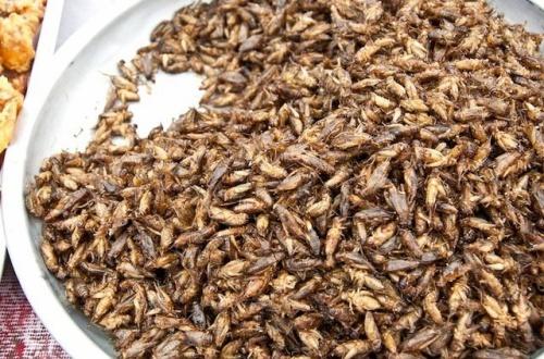 カナダでは昆虫食はすでに日常、大手スーパー「コオロギ粉」全国販売開始のサムネイル画像