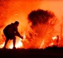 キケンな山火事から野ウサギを救った男 / 迫りくる地獄の業火に飛び込む姿に世界中が感動