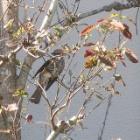 『茨城県北部で見られる秋の野鳥をG7X MarkⅡで撮りました』の画像