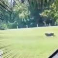 イヌの足の速さはどれくらい? 車と一緒に走ってみた → こんな感じになりました…
