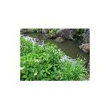『お庭の様子』の画像