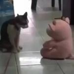 ぬいぐるみにフェイタリティをする猫が話題に。