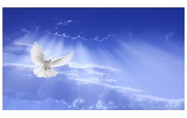 『コイノニアNo14 交わりの意味 聖霊様の同労者となるとは?』の画像