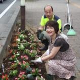 『戸田市 市役所南通りの花の植え替えを行いました』の画像