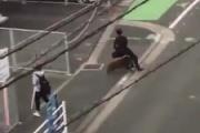 【福岡】イノシシがサラリーマンを襲撃 人が平行に... ※動画