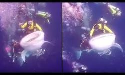 【動画あり】サメに「乗った」ダイバー逮捕される