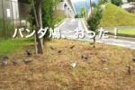 第二京阪国道の高架下にパンダ鳩がおった!〜変わった模様の鳩、発見〜
