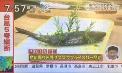 【悲報】もこみち氏、魚に水草をぶっさす