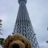 『日本です ~【東京晴空塔 スカイツリーへ】』の画像
