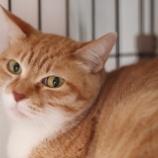 『【里親募集中】日本猫のむむくん』の画像