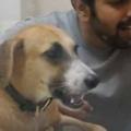 イヌの隣で飼い主が歌う。アァアァァ~♪ 徐々に音程をあげる → 犬はこうなる…