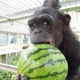 『ダウン症のチンパンジー』の画像